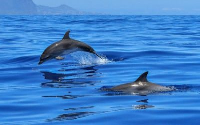 Escursioni in Catamarano alla scoperta dei delfini del mar jonio